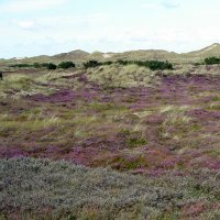12. Coastal dune landscape, Fanoe, Denmark (Photo-copyright: Environmental Centre Ribe)