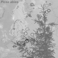 19. Late Pleistocene and Holocene distribution of macrofossil and stomata records for Picea (Fig. 1 modified; Picea abies photo copyright: Normand-Treier)
